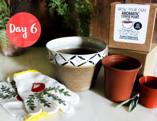 Win this Urban Planter Gift Set! | Style & Spice